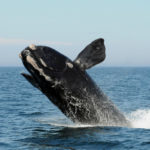 'Whales and Warming' at Bigelow's Cafe Sci on Aug. 13