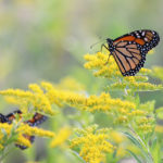 Butterfly Safari with Coastal Rivers on Sept. 22