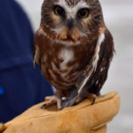 Chewonki's Owls of Maine Program at Camden Public Library