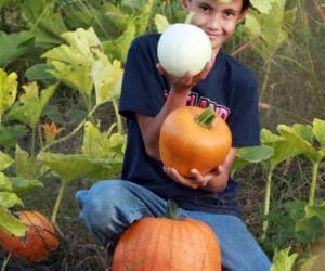 The farm's resident garden elf checks the pumpkin patch. (Photo courtesy Kelly Payson-Roopchand)