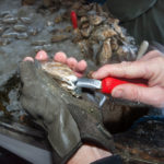 Pemaquid Oyster Festival is Sept. 29