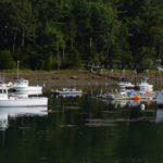 Cold Spring, Late Molt Lead to Slow Start for Lobster Fishery