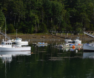Lobster boats at their moorings near the South Bristol Fishermen's Co-op on Aug. 29. The co-op's numbers are down this year due to a late molt and a slow start, says co-op President Tim Alley. (Evan Houk photo)