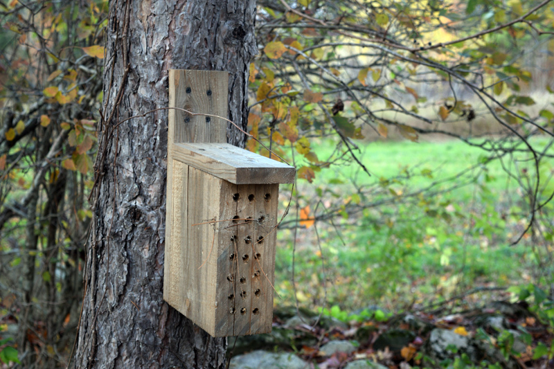 A nesting box at Bluefields Farm. (Jessica Clifford photo)