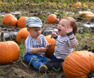 Leo Maheu Jr. (left) fiddles with a stem while Jude Fleury-Kahn shrieks with excitement in the pumpkin patch at SeaLyon Farm in Alna on Sunday, Oct. 13. (Jessica Clifford photo)