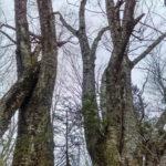 Midcoast Conservancy Accepts Donation to Bog Brook Sanctuary