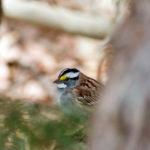 Mid-Coast Audubon Field Trip to Green Point Wildlife Area