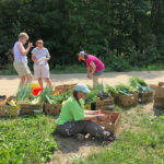 Maine Gleaning Network Announces 2019 Maine Gleaning Week