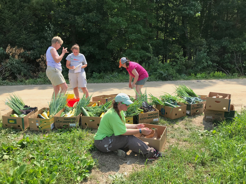 Merrymeeting Gleaners prepare gleaned vegetables for distribution. (Photo courtesy Harriet Van Vleck)