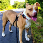 Midcoast Humane to Hold Second Annual Shelter-Bration