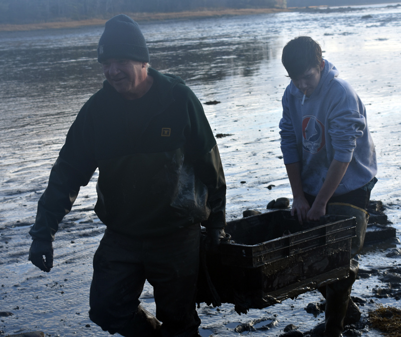 Bremen Selectman Boe Marsh and Nickolas Griffin carry a crate off the flats of Broad Cove the morning of Friday, Nov. 1. (Alexander Violo photo)