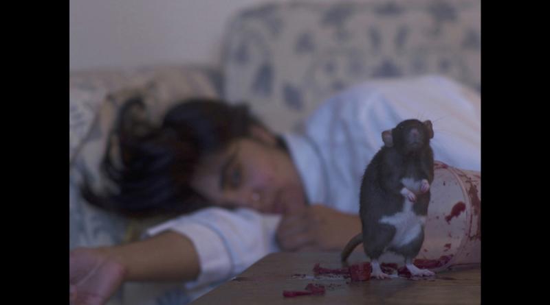 "A scene from Hillia Aho's recent short film ""Portrait of a Rat."" (Movie still courtesy Hillia Aho)"