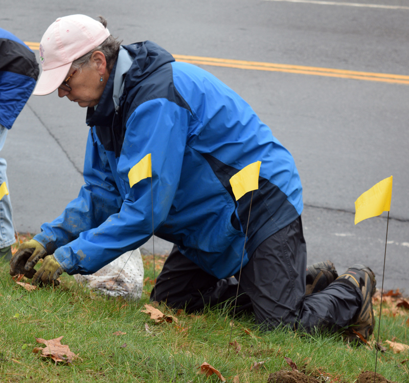 Lisa Freeman, one of the organizers, plants a daffodil bulb on the hill in front of the Lincoln County Courthouse in Wiscasset on Tuesday, Nov. 5, 100 years after the Maine Legislature's vote in support of women's suffrage. (Jessica Clifford photo)