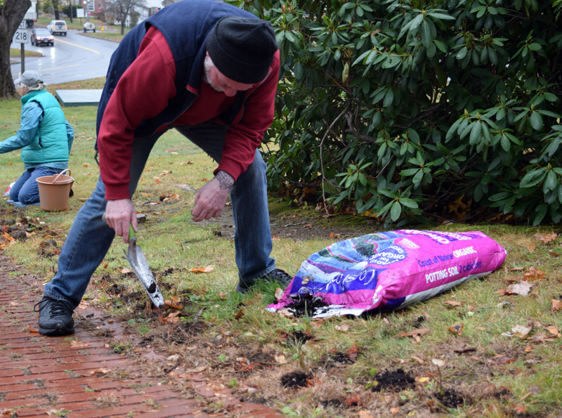 Wiscasset Selectman Ben Rines Jr. plants a daffodil bulb on the Wiscasset town common Tuesday, Nov. 5, as part of an effort to commemorate the 100th anniversary of women's right to vote in America. (Jessica Clifford photo)