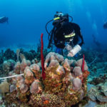 Fishing Puts Coral Reef Ecosystem at Risk in Dominican Republic