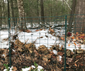 Snow-covered compost quietly breaks down on a winter day. (Photo courtesy Lee Emmons)