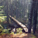Coastal Rivers Guided Hike on Woodland Ecology at Seal Cove Shore
