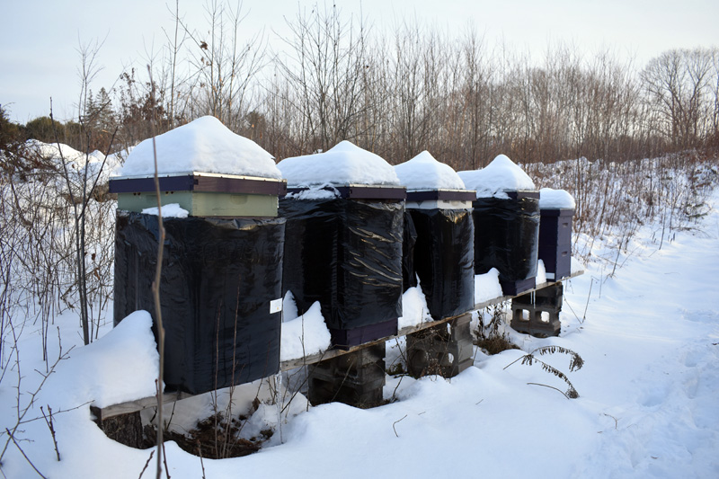 Beehives at Switchback Farm. The honeybees form a ball around the queen and move around to keep the queen warm during the winter, according to farmer Maisie Sturtevant. (Alexander Violo photo)
