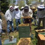 Beekeeping Course Starts Feb. 25