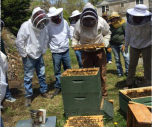 Beekeepers make a split at an Knox-Lincoln County Beekeepers open hive event.