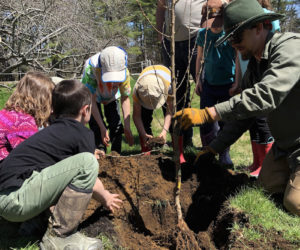 Juniper Hill School for Place-Based Education students plant a school orchard with ReTrees Maine. (Photo courtesy Juniper Hill School for Place-Based Education)