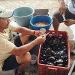 Fishermen Adapt to Environmental Change in Varied Ways, Study Finds
