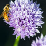 Learn About Honey Bees on Jan. 20