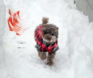 Matt Baron's photo of his dog Jax enjoying the snow in Edgecomb received the most reader votes to win the February #LCNme365 photo contest. Baron will receive a $50 gift certificate from Rising Tide Co-op, the sponsor of the February photo contest.