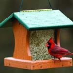 Mid-Coast Audubon Bird Seed Sale Fundraiser