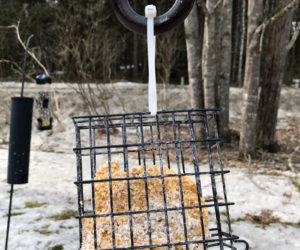 A half-eaten suet cake on a late winter morning. (Photo courtesy Lee Emmons)
