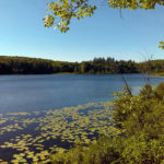 Midcoast Conservancy Partners with Nature Conservancy on Jefferson Property