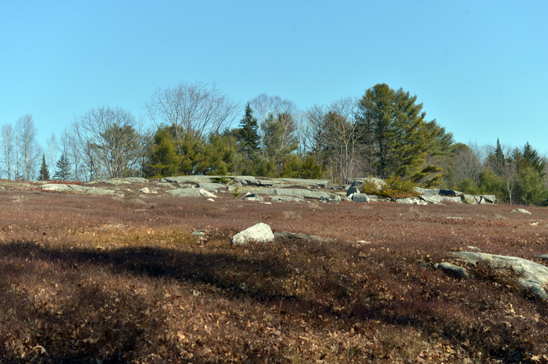 The MVLT Founders Preserve starts on the town of Waldoboro's Quarry Hill Preserve and follows the perimeter of a blueberry field from the kiosk. (Paula Roberts photo)
