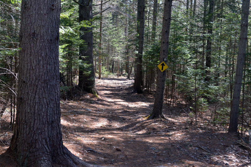The trail through the MVLT Founders Preserve in Waldoboro is mostly wooded. (Paula Roberts photo)