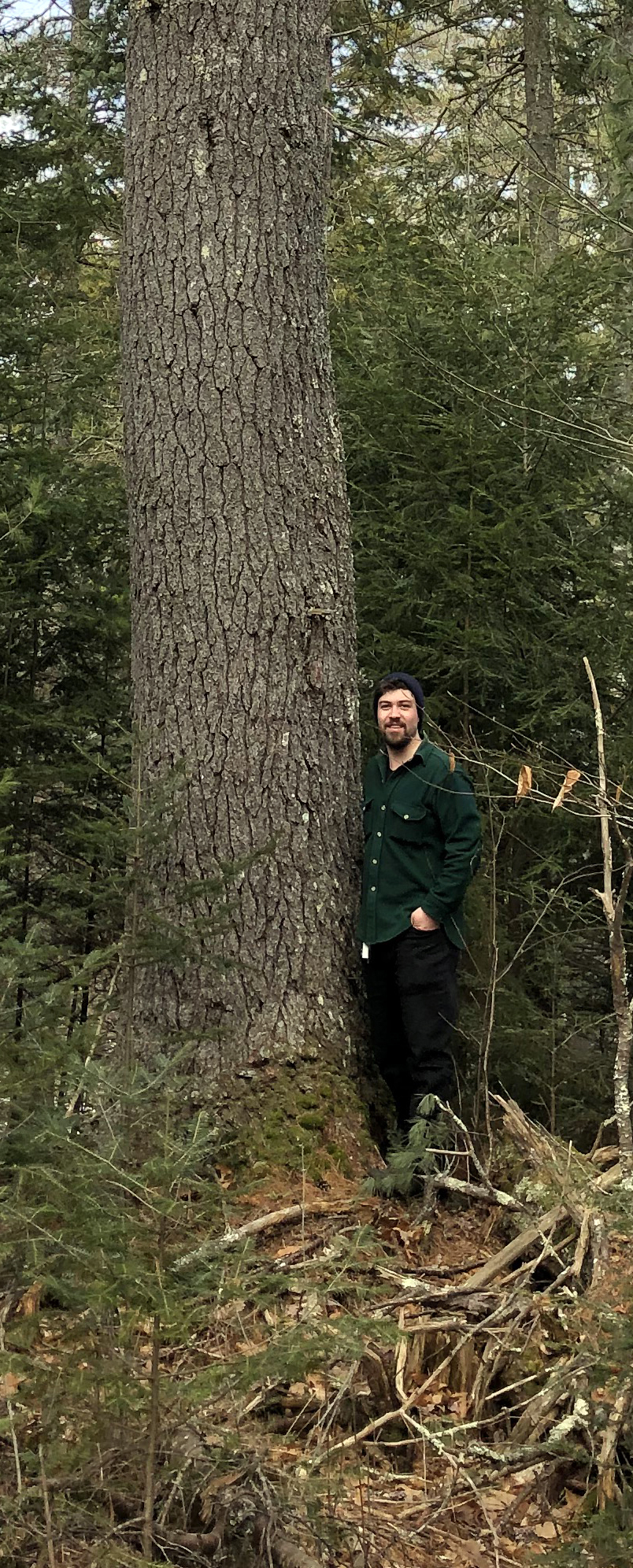 Noah Begin stands next to a 3-foot-diameter pine tree on the Castner Creek property in Damariscotta. (Photo courtesy Jenny Begin)