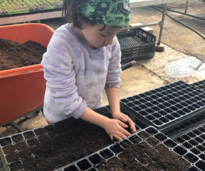 Farm directors Sara Cawthon and Megan Taft recruit their daughter Adley to help with planting seedlings.