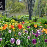 Grow Knowledge from Home with Coastal Maine Botanical Gardens