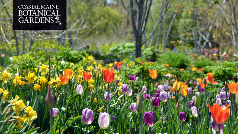 """With the arrival of spring in Maine, so too comes the promise of brighter days ahead. The Coastal Maine Botanical Gardens are providing online classes to """"grow"""" knowledge from home."""