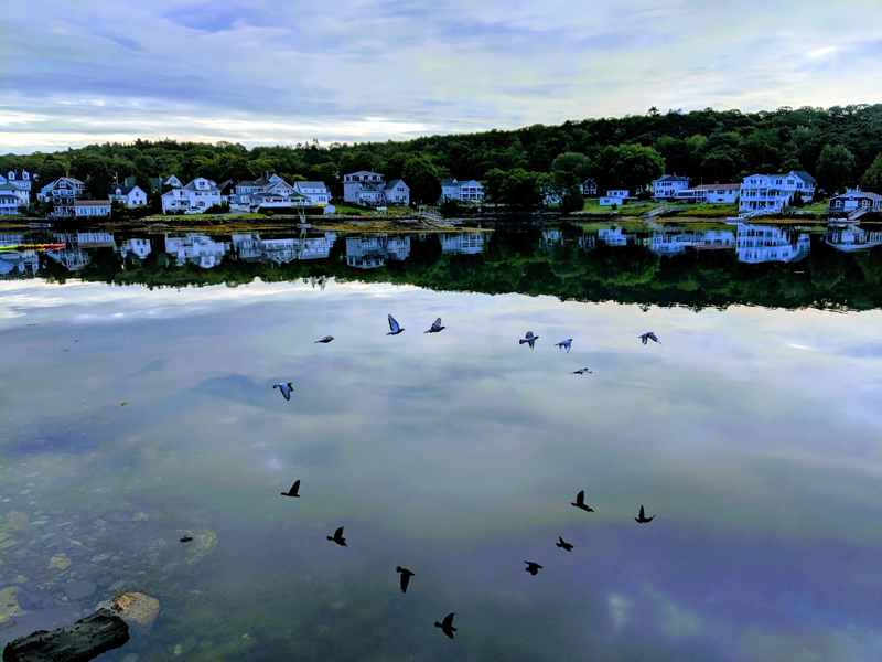 Dick Morrison's photo of birds flying over Boothbay Harbor received the most votes to win the April #LCNme365 photo contest. Morrison will receive a $50 gift certificate to Newcastle Chrysler Dodge Jeep Ram Viper, the sponsor of the April contest.