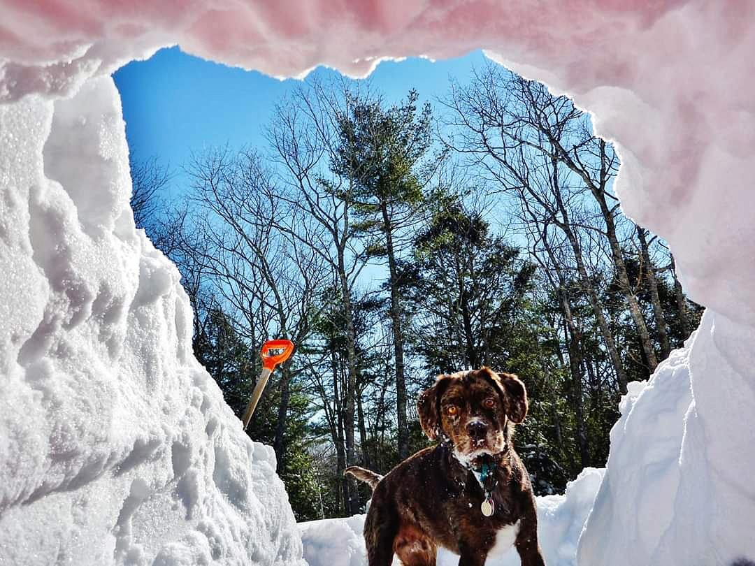 Hope Prentice's photo of her dog, Moxie, peering into a snow cave received the most votes to win the March #LCNme365 photo contest. Prentice will receive a $50 gift certificate to Coastal Car Wash and Detail Center, of Damariscotta and Boothbay Harbor, the sponsor of the March contest.