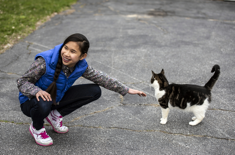 Yuji Smith, 12, reaches out to pet her cat, Gideon, in Edgecomb on Friday, May 8. Smith is the youngest volunteer at Paw in the Door, an organization in Bath that rehabilitates lost and abandoned cats. (Bisi Cameron Yee photo)