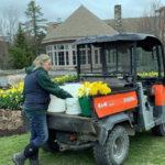 Coastal Maine Botanical Gardens Delivers Daffodils to Community