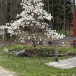 Waldoborough Historical Society Updates