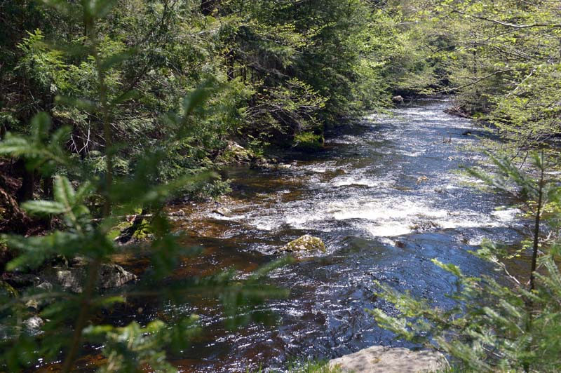 Looking down on the Sheepscot River from the top of an old bridge abutment on Palermo Preserve. (Paula Roberts photo)