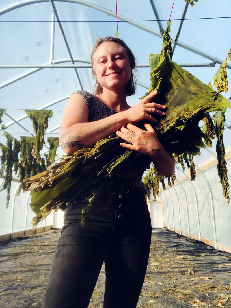 Swell Seaweeds owner Sarah Wineberg Thorpe holds sugar kelp. She dries the kelp after harvest, which makes it shelf-stable for at least a year. (Photo courtesy Sarah Wineberg Thorpe)