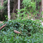 Coastal Rivers Offers Online Program Invasive Plants