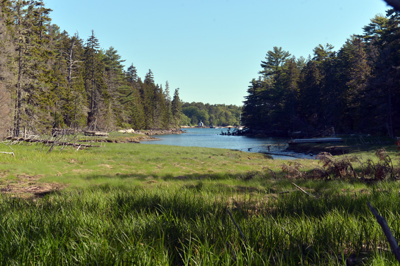 Long Cove from the Todd Wildlife Sanctuary on Hog Island in Bremen. (Paula Roberts photo)