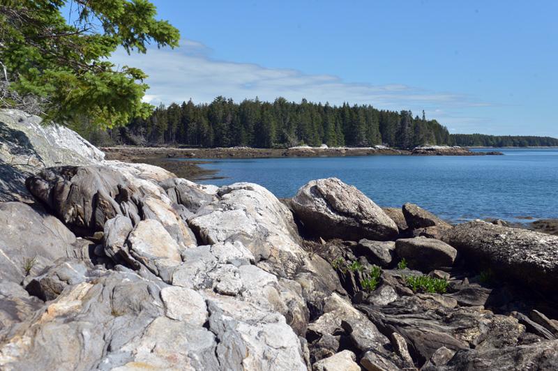 Rocks along the East Shore Trail on Hog Island. (Paula Roberts photo)
