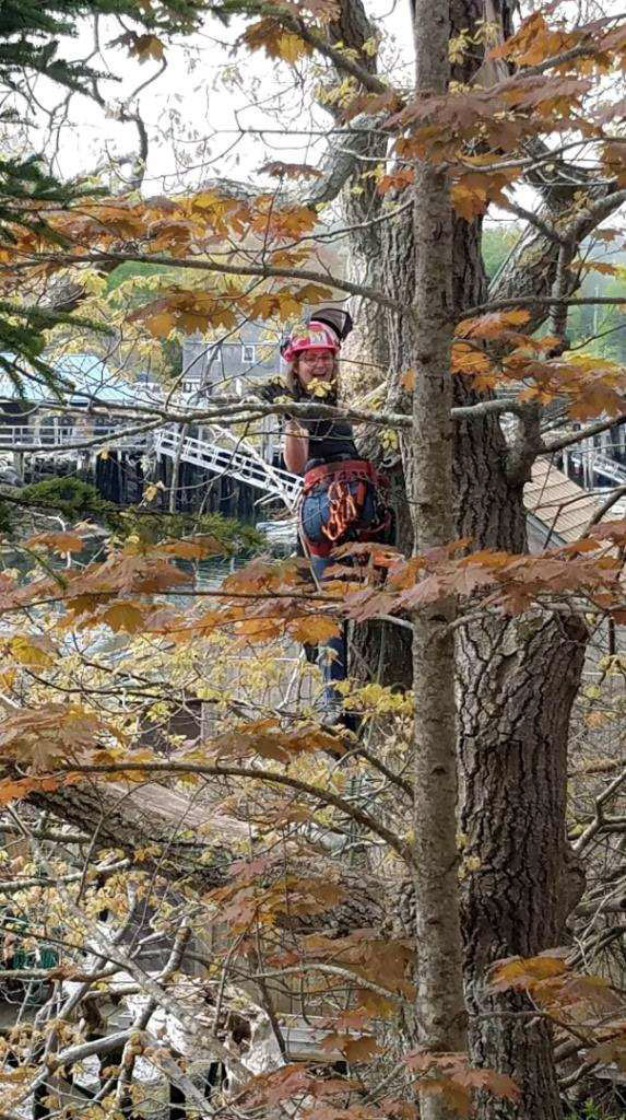 Colleen Kaplinger, of Waldoboro, climbs a tree for Five K Arborist. Kaplinger recently passed her exams to become a first-class landscape arborist and a first-class utility arborist. (Photo courtesy Dan Kaplinger)