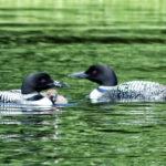 Lakes, Ponds Online Program