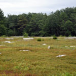 Waldoboro Mulls Future of Blueberry Fields at Quarry Hill